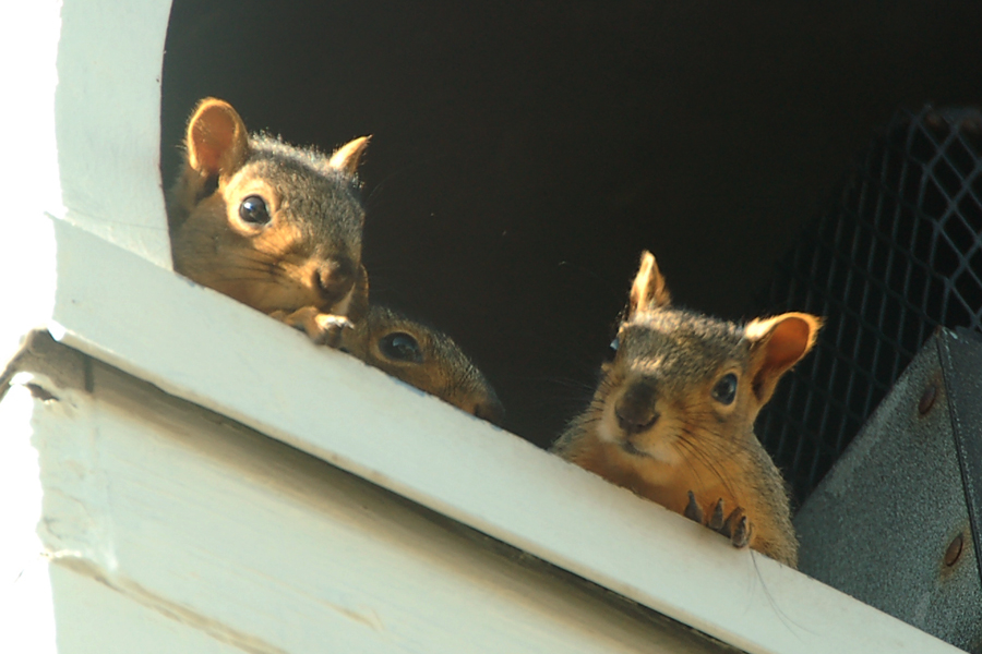 Squirrels 006